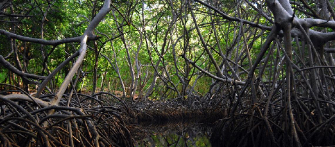 https://www.eltiempo.com/vida/medio-ambiente/colombia-ha-perdido-cobertura-de-manglares-que-celebran-su-dia-internacional-114480